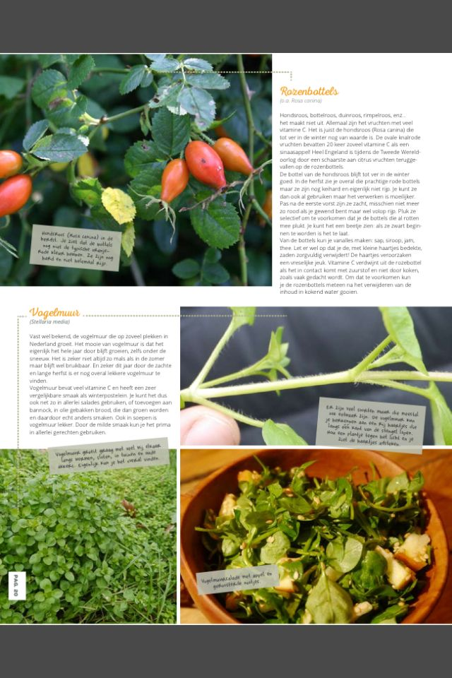 Eten in de winter - Get out magazine. Eetbare wilde planten in de winter 3