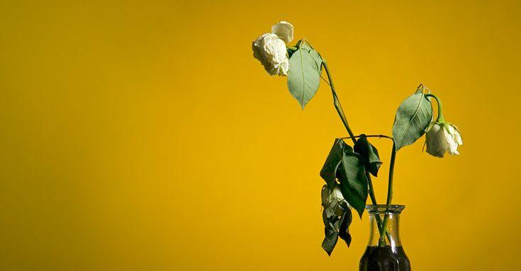 Schräg! Menschen richten letzte Worte an Pflanzen #News #Wohnen