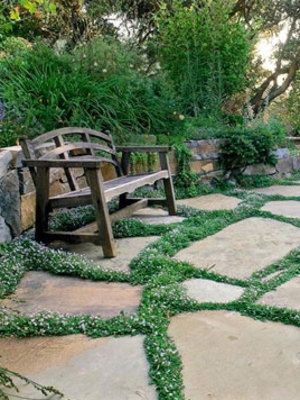 Creeping thyme blooming between the paving stones keeps weeds out of the garden path