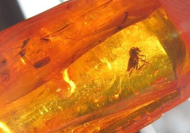Natural Baltic amber 1.5 gr insect mosquito inclusion bead 琥珀 gemstone jewelry #HandMade