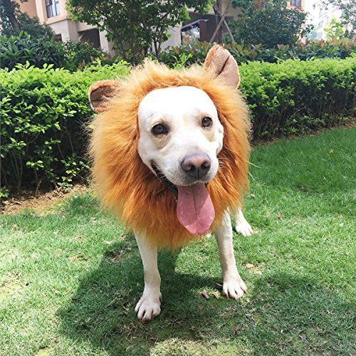 Lion Mane for Dog, PBPBOX Dog Lion Mane with Open Ears Adjustable Lion Wig for Dog Costume - Whether for Halloween, some other holiday, a cosplay gathering, or just for any random day, this lion's mane wig with attached ears is sure to add lots of fun and laughter to you and your dog's life. A happy, tail-wagging dog may not be completely convincing as a ferocious lion, but he or she is ...