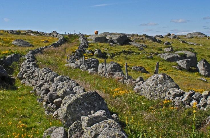 the Aubrac plateau