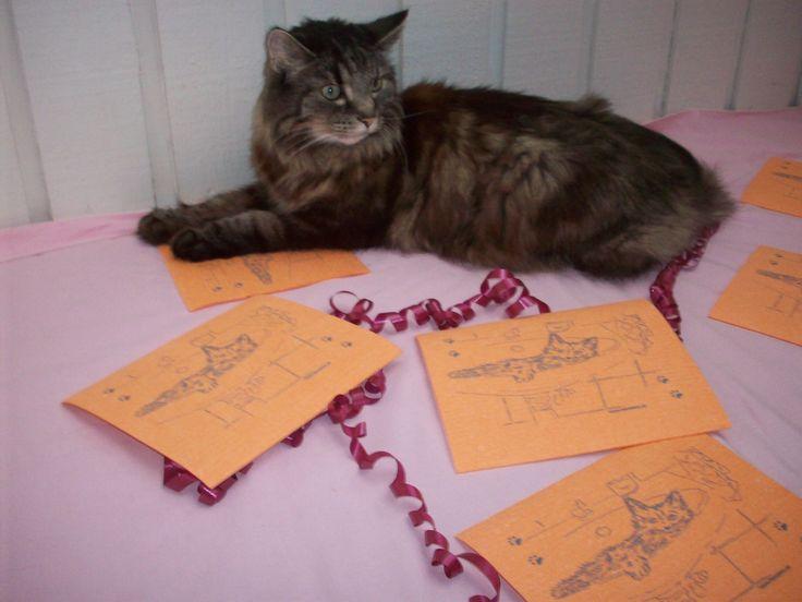 Vackra Simba ihop med de färgglada orange disktrasorna En storsäljare på www.katt4you.se