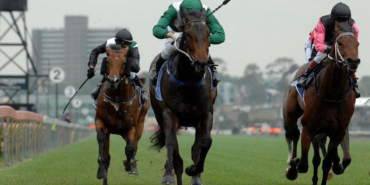 Flat Racing Master | Betting Gods created by Tom Nelson, Professional Sports Tipster