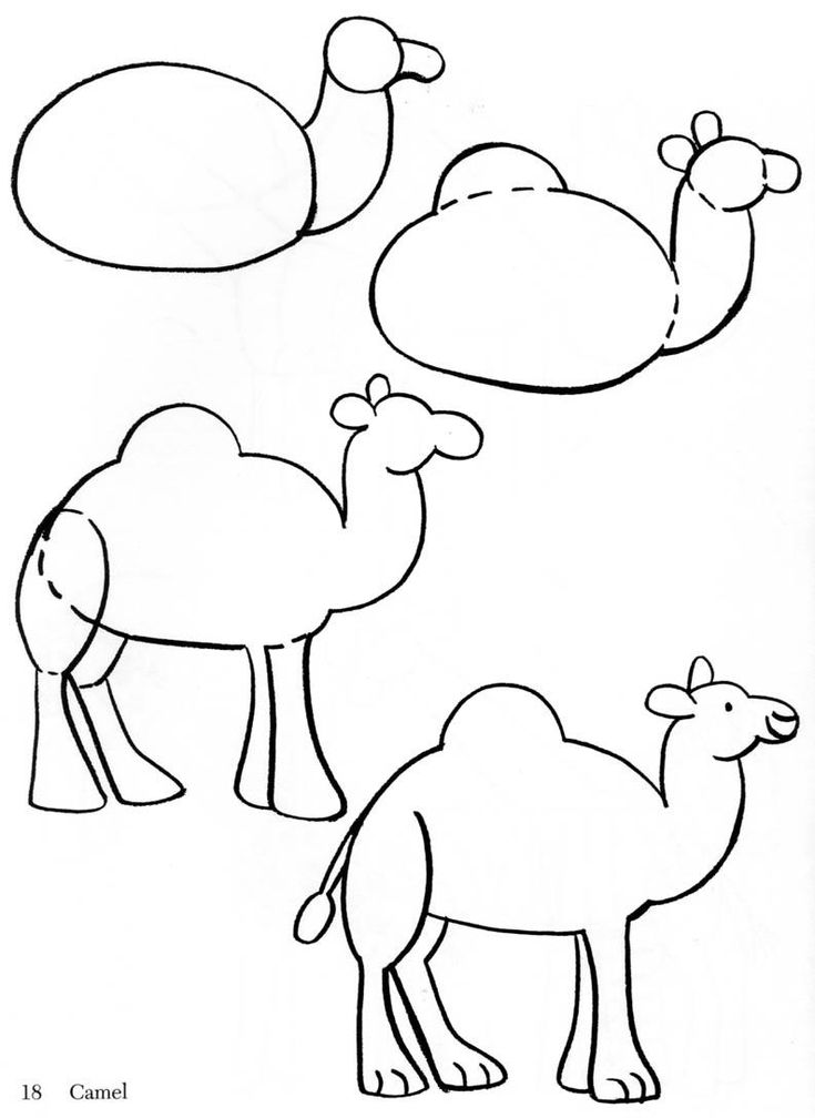 (2013-12) ... a dromedary- (otherwise known as a camel)