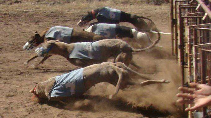 Petición · Prohibición de las carreras de galgos #STOPGALGUEROS · Change.org