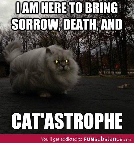 Bring Me The Cats Ass Meme
