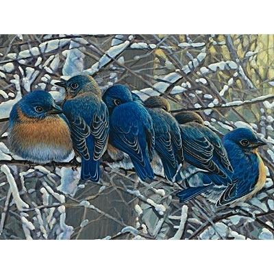 bluebirds: