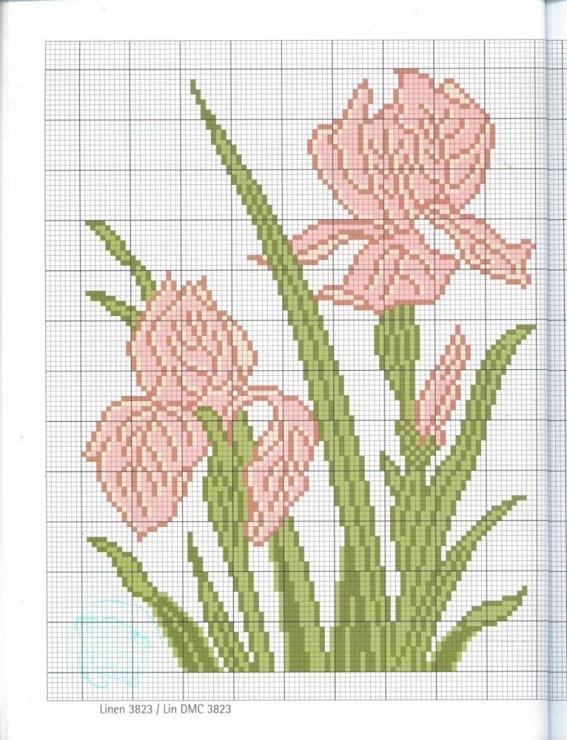 Gallery.ru / Фото #20 - Naturals nature - Mongia Pink iris.