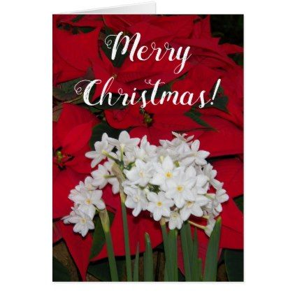 Poinsettias and Paperwhite Narcissus Holiday Card - red gifts color style cyo diy personalize unique
