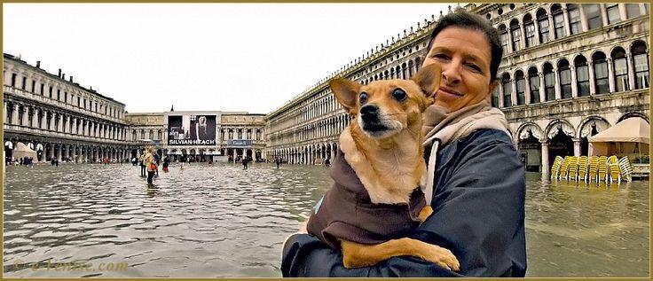 Acqua Alta Venise 1er Nov. 2012: Toutou bien au sec dans les bras de sa maîtresse, sur la Piazza San Marco, au centre des Procuratie Nove et Vechie, dans le Sestier de Saint-Marc à Venise.