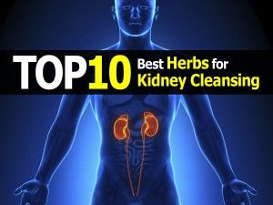 Herbs for weight loss The 10 Best Herbs for Kidney Cleansing