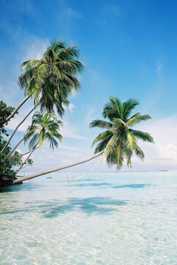 Maldives - Beautiful Analog photograph with amazing contrast of blue and green.