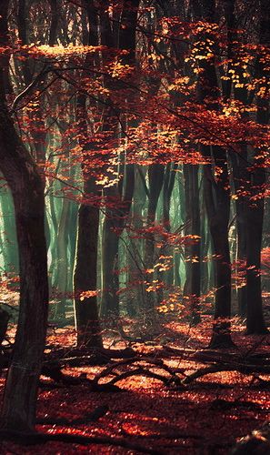 Mystical Forest - Netherlands <3