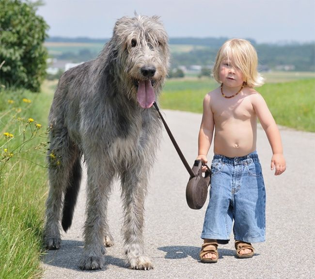 A child's best friend: 25 wonderful children and their loving dogs