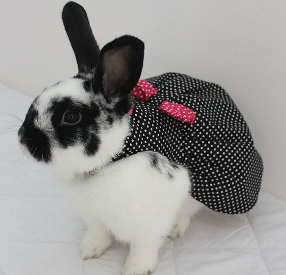 Black polka dot bunny harness dress with bow. Made by turvytopsy, $40.00