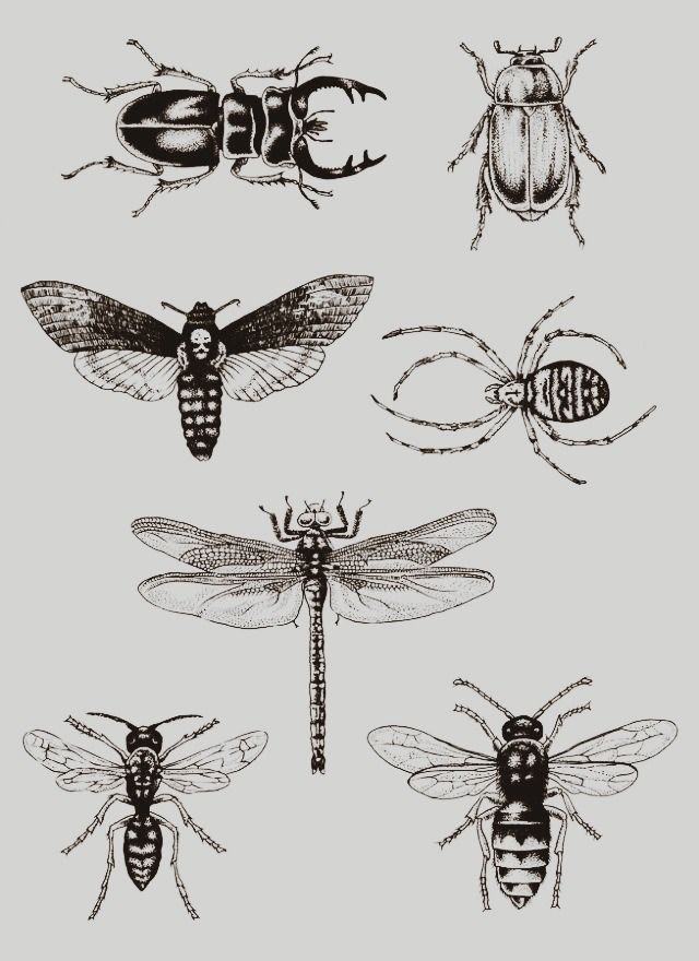 Tattoo ideas : bugs - beetles - spider - dragonfly - wasp                                                                                                                                                     More