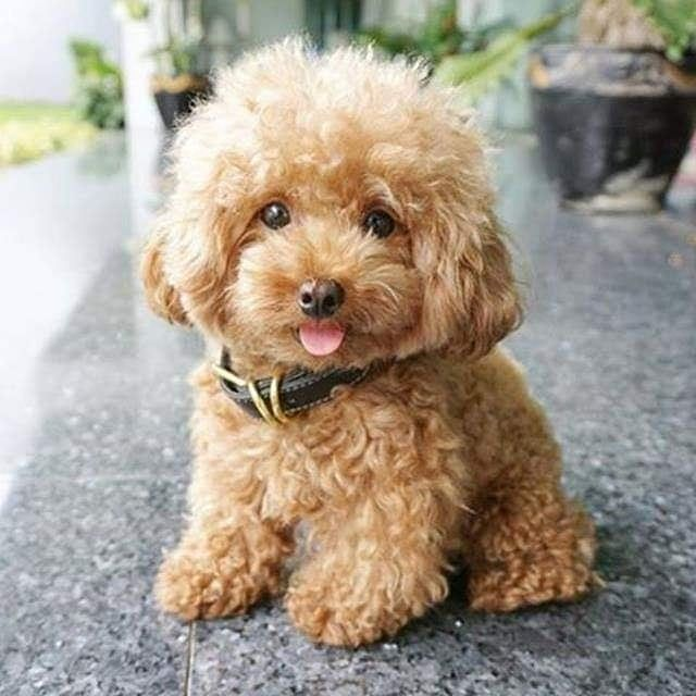 One Of Life S Biggest Pleasures Ctto Inspireatheart Pleasure Dog Dogs Instadogs Pets Petlo Cute Puppies Cute Dogs And Puppies Cute Animals