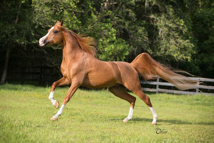 Horses for sale casino