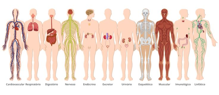 Sistemas do Corpo Humano                                                                                                                                                                                 Mais