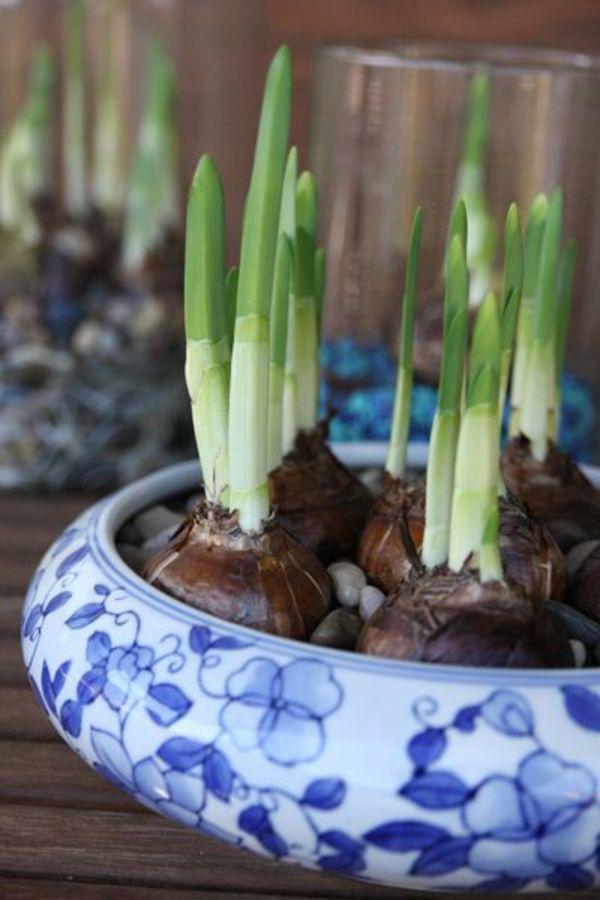 Best blumenzwiebeln winterpflanzen gef keramisch sch ssel wei