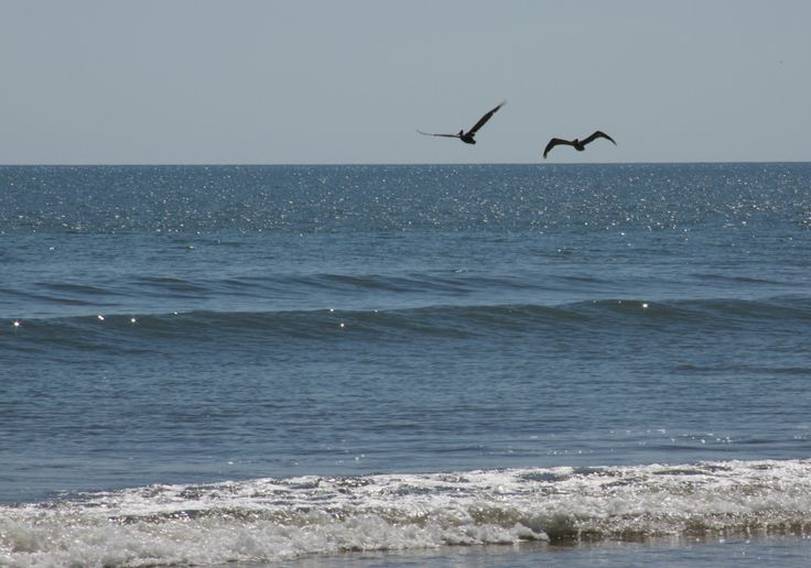 Sparkling surf and soaring sea birds welcome visitors to Beachwalker County Park on Kiawah Island, South Carolina.