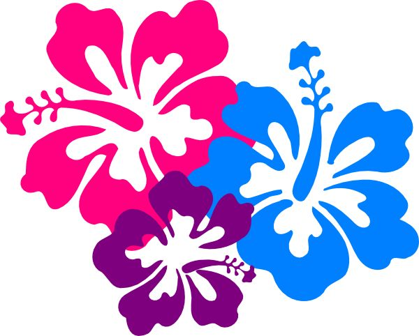 the  best hawaiian flower drawing ideas on   plumeria, Beautiful flower