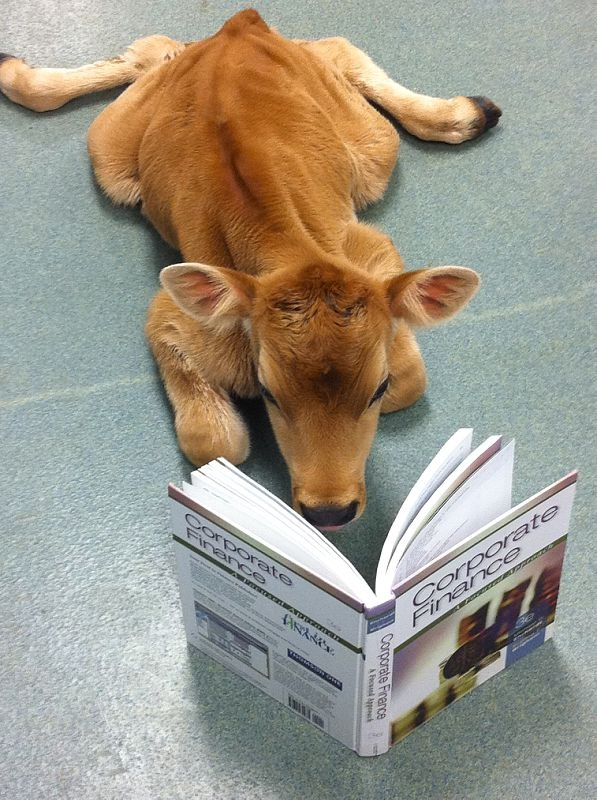 Our excellent curriculum is for everyone at Berry, including or amazing herd of Jersey cattle