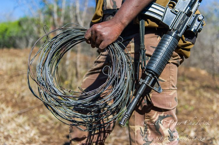Rangers Recovering Snares by Conservation Photographer Peter Chadwick