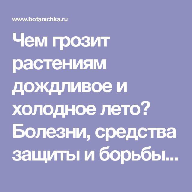 Чем грозит растениям дождливое и холодное лето? Болезни, средства защиты и борьбы - Ботаничка.ru