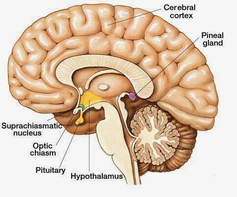 Jeremy E. McDonald: Pineal Gland referenced in the bible again and aga...