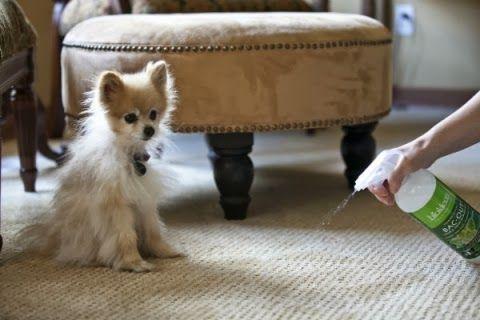 Aqui Como Eliminar El Olor A Perro O de Tu Casa