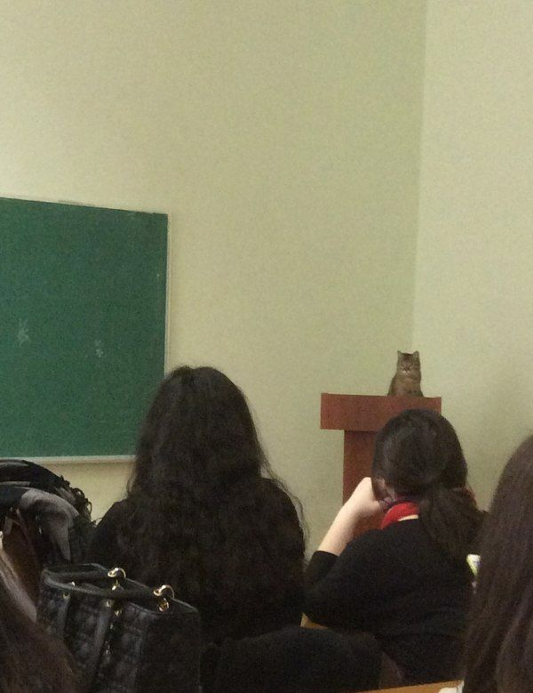 Substitute Teacher - Cat Teaches Class from Podium - Today's Lesson is Cat WTF  ---- best hilarious jokes funny pictures walmart humor fail