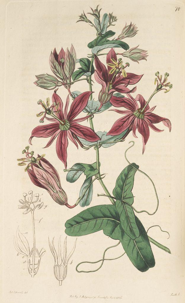 364 best Botanical lllustration: Floral, Succulent, Fungi ...  364 best Botani...