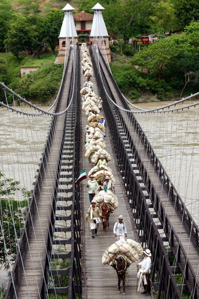 Campesinos transport their produce across the Puente de Occidente near Santa Fe de Antioquia, Colombia
