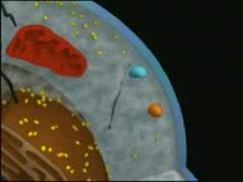 Citoplasma de la celula