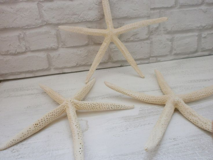 "Set of 3 Finger Starfish 12"" Super large Starfish Beach Wedding Decor Natural White Starfish Nautical Wedding Decor Wedding Centerpiece by VesyArtstudio on Etsy https://www.etsy.com/listing/290803345/set-of-3-finger-starfish-12-super-large"