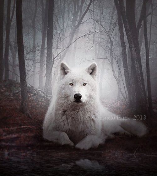 chrystalstar:  Silence of the Wolves