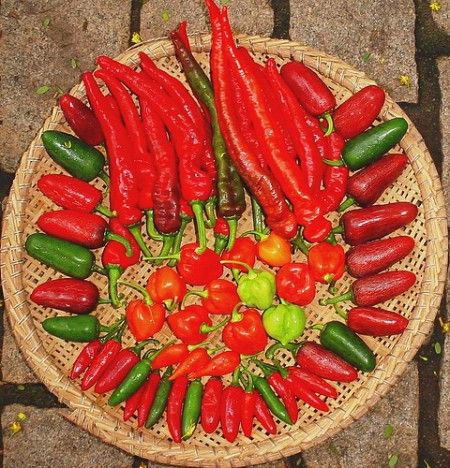 Different types of pepper