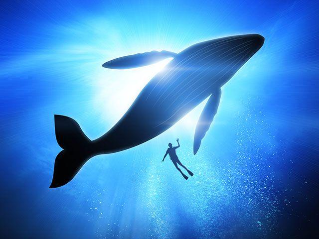 """Résultat de recherche d'images pour """"baleine"""""""