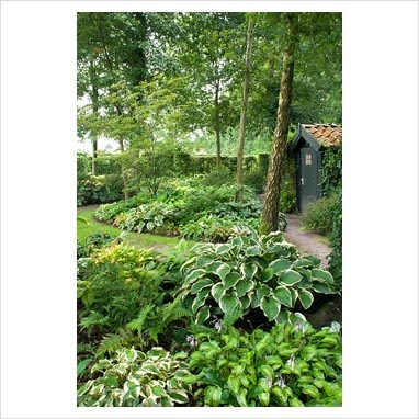 68 best landscaping and shade landscaping images on pinterest