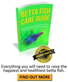 22 best images about fundip on pinterest reading room for Order betta fish