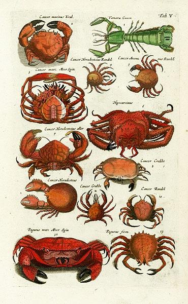 Jonston Fish Prints Shell Crab Lobster Jellyfish Sea 1767 Pinterest And Print