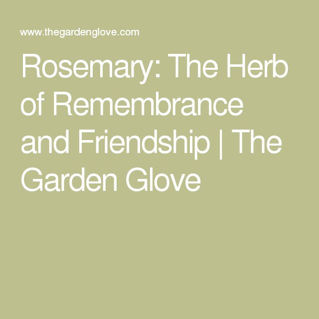 Rosemary: The Herb of Remembrance and Friendship | The Garden Glove