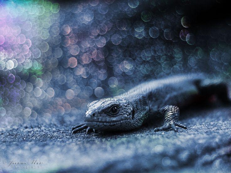 lizard - null