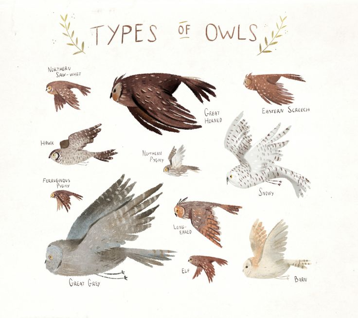 Types of owls print. Love the colors and movement in this image!