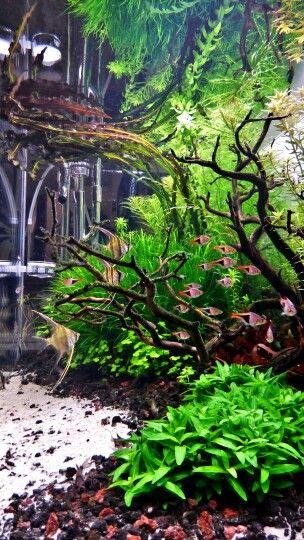 #Wandarful #Aquarium #plants