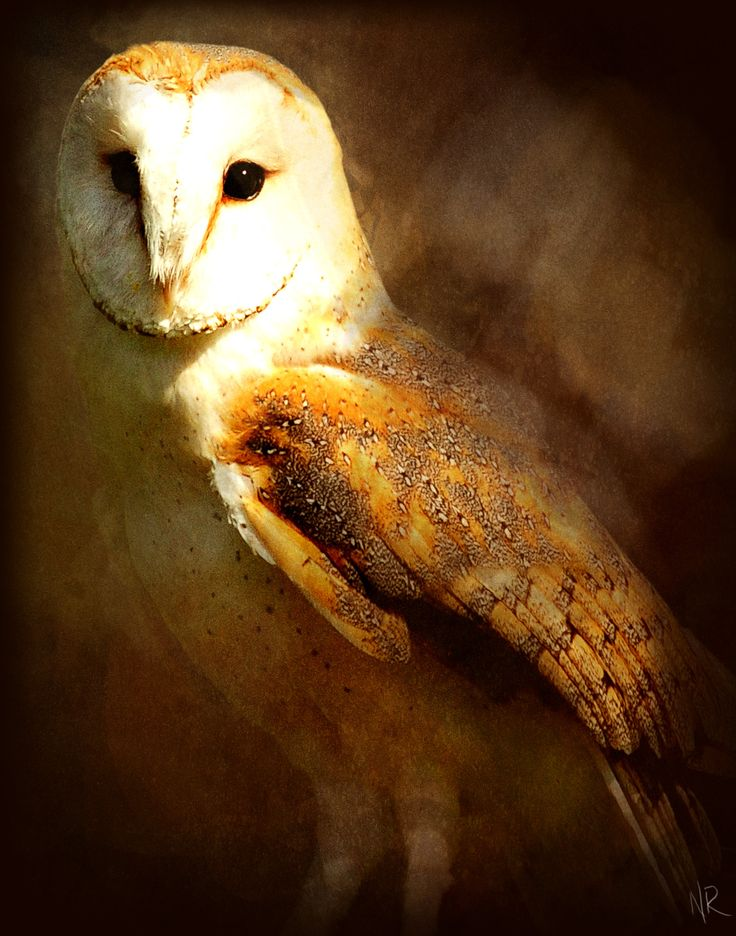 125 best night owls images on pinterest white owls for Night owl paint color