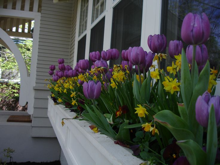 Tulips, Tet a Tet Daffodils, Pasys, Spring windowbox, Sarah's Cottage Creations