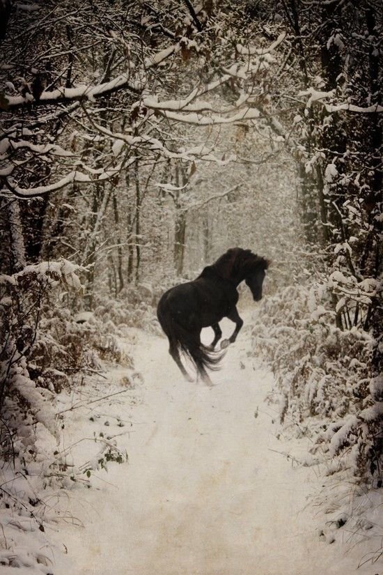 Black and white picture..black horse in snow... by Taber3